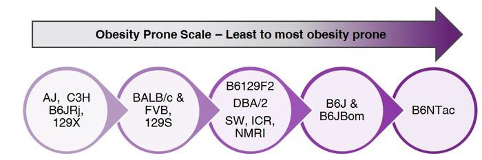 C57BL/6 Obesity Prone Scale