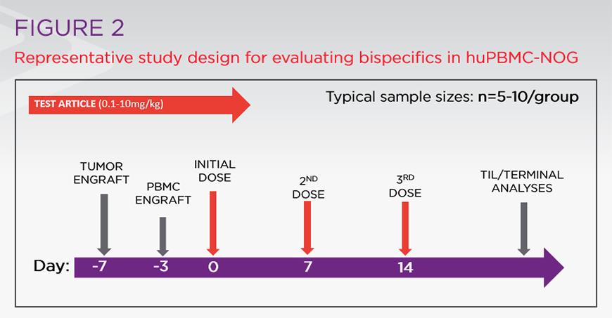 Representative study design for evaluating bispecifics in huPBMC-NOG