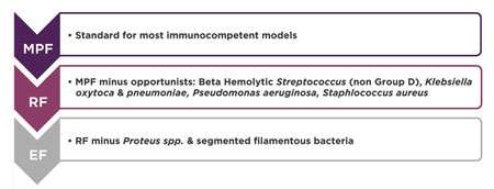 Conversion of Immunodeficient Rodent Models to Excluded Flora Health Standard