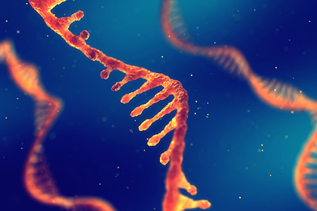 RNA Therapeutics: siRNA