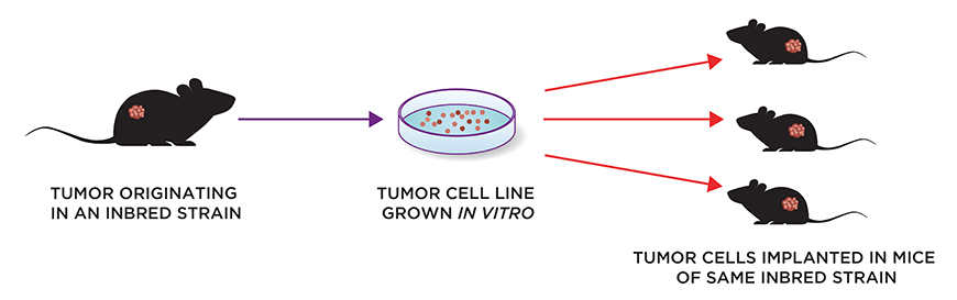 Syngeneic Tumor Model Health Standards