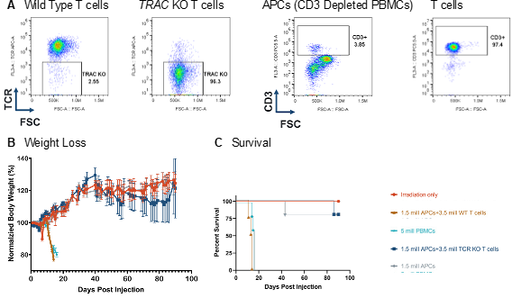 Figure 3: tcr KO t cells did not induce GvHD. (A) the endogenous tcr was removed via CRISPR/Cas9 targeting of the TRAC locus with 97% efficiency. (B) injection of tcr KO t cells in to nog mice did not induce GvHD, as no mice lost>20% of body weight, as compared to baseline (B) and induce similar survival as compared to controls (C).