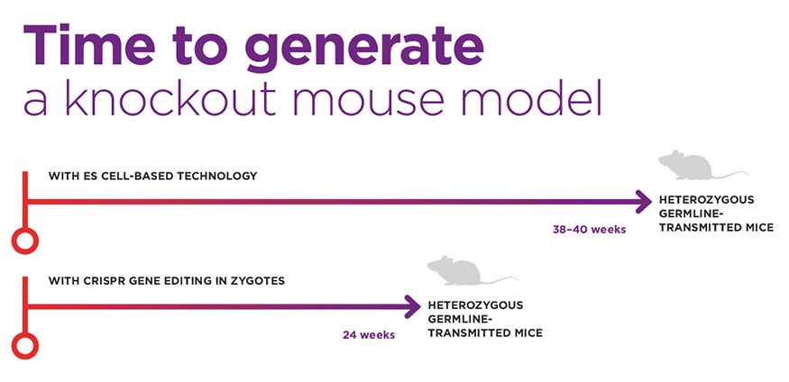 Time to generate a knockout mouse model with ES cell-based Technology and with crispr Gene editing in Zygotes