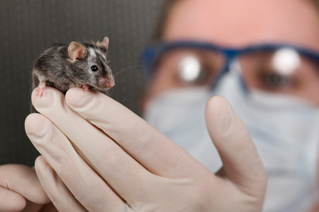 Why Your Transgenic Design Project Failed